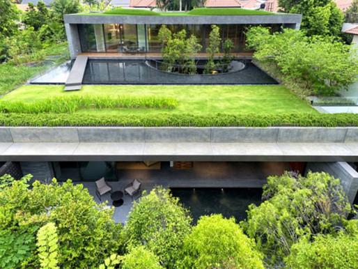 Telhado verde para aumentar o seu bem-estar
