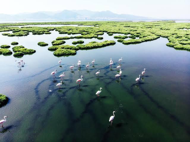 Pantanal mato grosso brasil