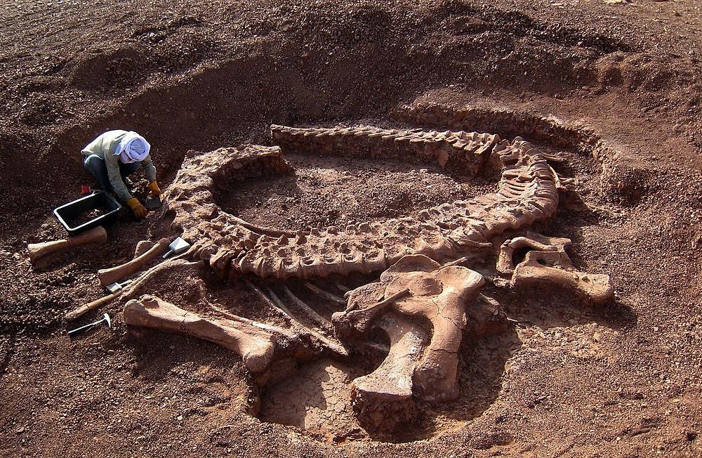 Ossos de dinossauro descoberto