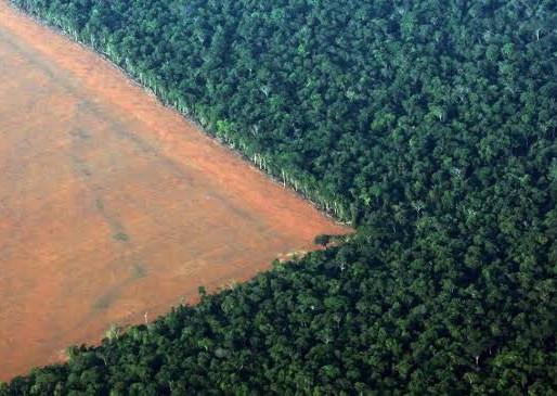 Desmatamento na Amazônia cai 70% em janeiro