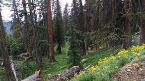 Colorado Trail - Day 7