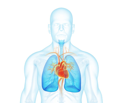 X-ray man front view. Heart, lungs, skel