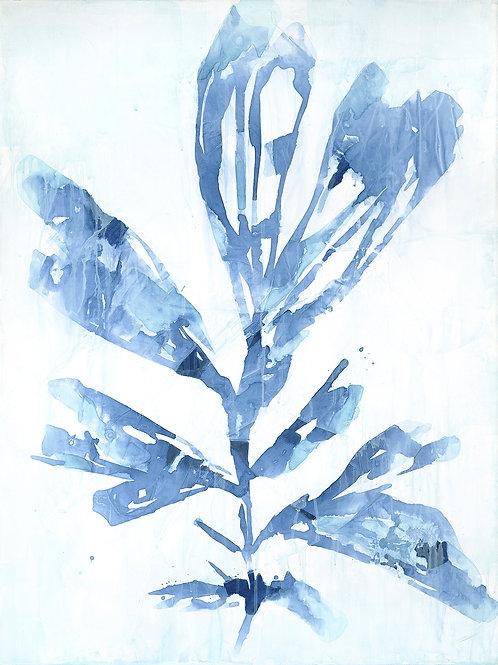 Indigo Botanica