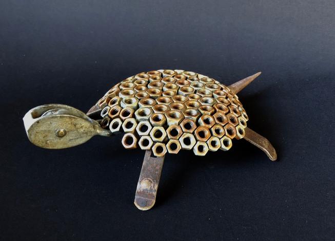 Nut Turtle