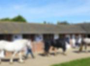 Oak Tree Cottages, Lighthouse Cottage, Oak tree Cottage, Church Fields Cottage, Dog friendly cottages, Dog friendly cottages Norfolk