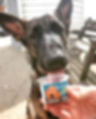 Enjoying a dog friendly Ice Cream in the
