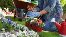 5 dicas para limpar seu jardim