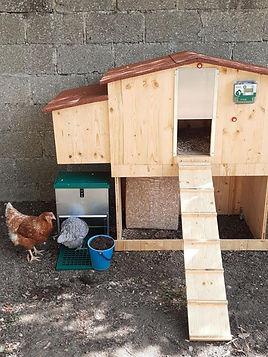 Enfants poules ecole VH.jpg