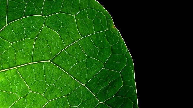 1190273-gorgerous-green-leaf-wallpaper-h
