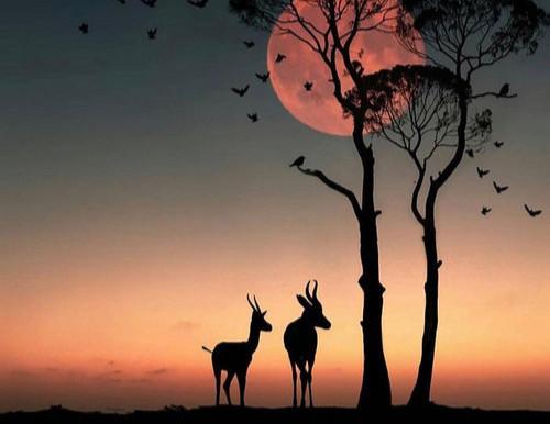 Pleine Lune du 27 Février, Abondance & Prospérité.