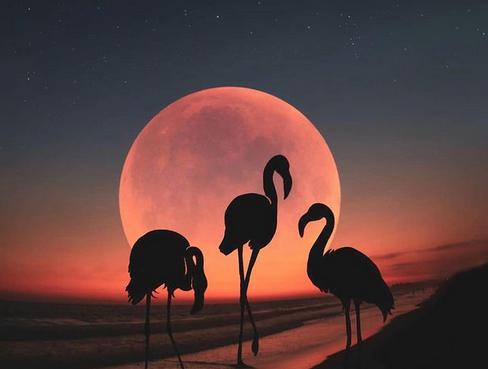 Mémoire Cellulaire & Réalisation Karmique, Les Énergies de la Pleine Lune du 27 Avril.