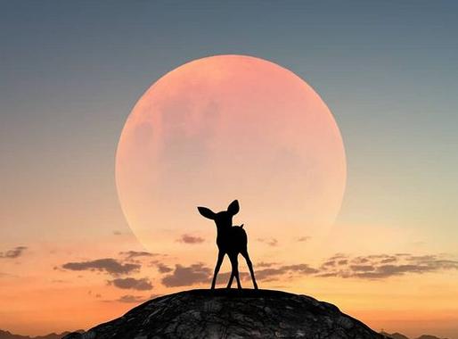 Pleine Lune du 28 Janvier, Tendances vibratoires & énergétiques