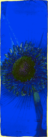 Blue Anemone Luxury Silk Scarf