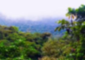 Bosque Nativo Salteño
