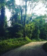 Camino Finca Pintascayo