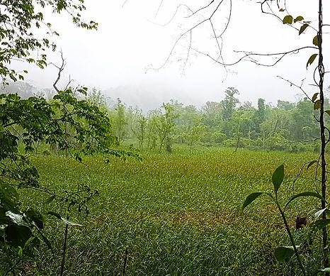 Totoral, Laguna San Carlos
