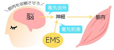 EMSの効果