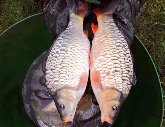 VS Fisheries Fish