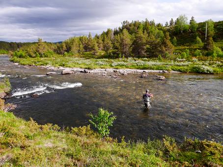 Séjour Mouche en Norvège
