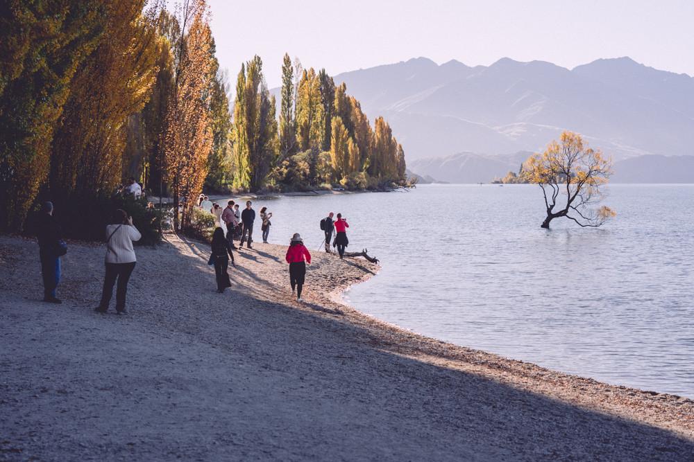 That Wanaka Tree Tourists