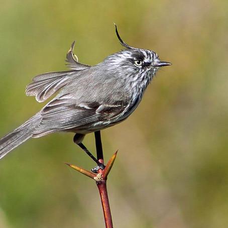 La observación de aves toma vuelo con la apertura de temporada