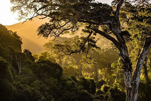 nature pic.jpg