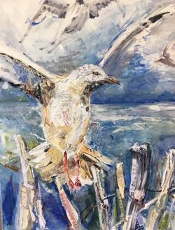 Fulton Beach Gulls