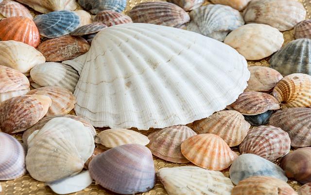 初期のスプーンは貝殻だった