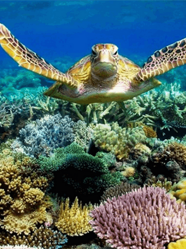 Sea-Turtle-Header.png