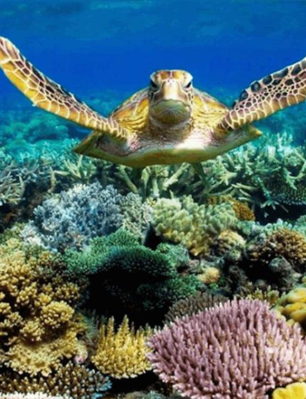 Sea-Turtle-Header.png