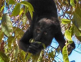 Monkey River 1.jpg