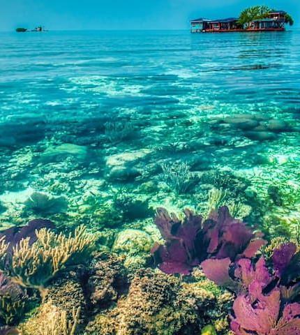 Bird Island Atoll