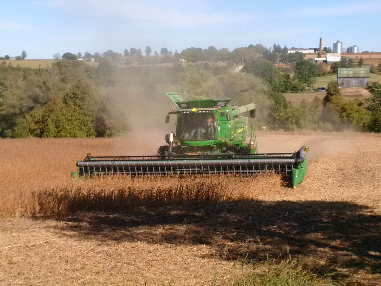 Soybean harvest - home farm.jpg