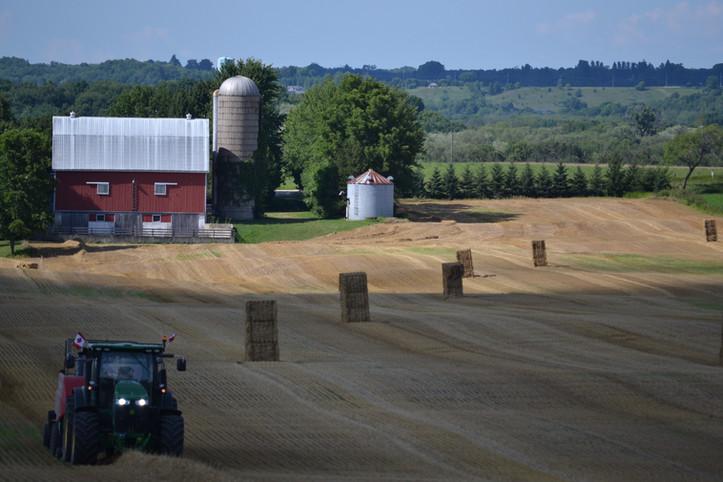 Wheat harvest - Carrick east farm
