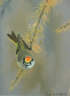 kinglet close up (2)