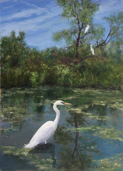 Common Egrets in Grey County