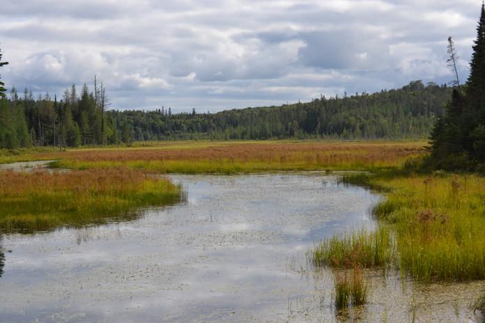 Large beaver marsh in SW corner of property