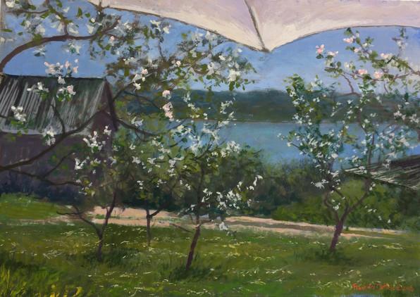 Apple Orchard at Glen An Oir
