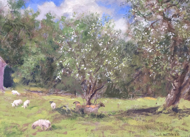Sheep in Spring Orchard