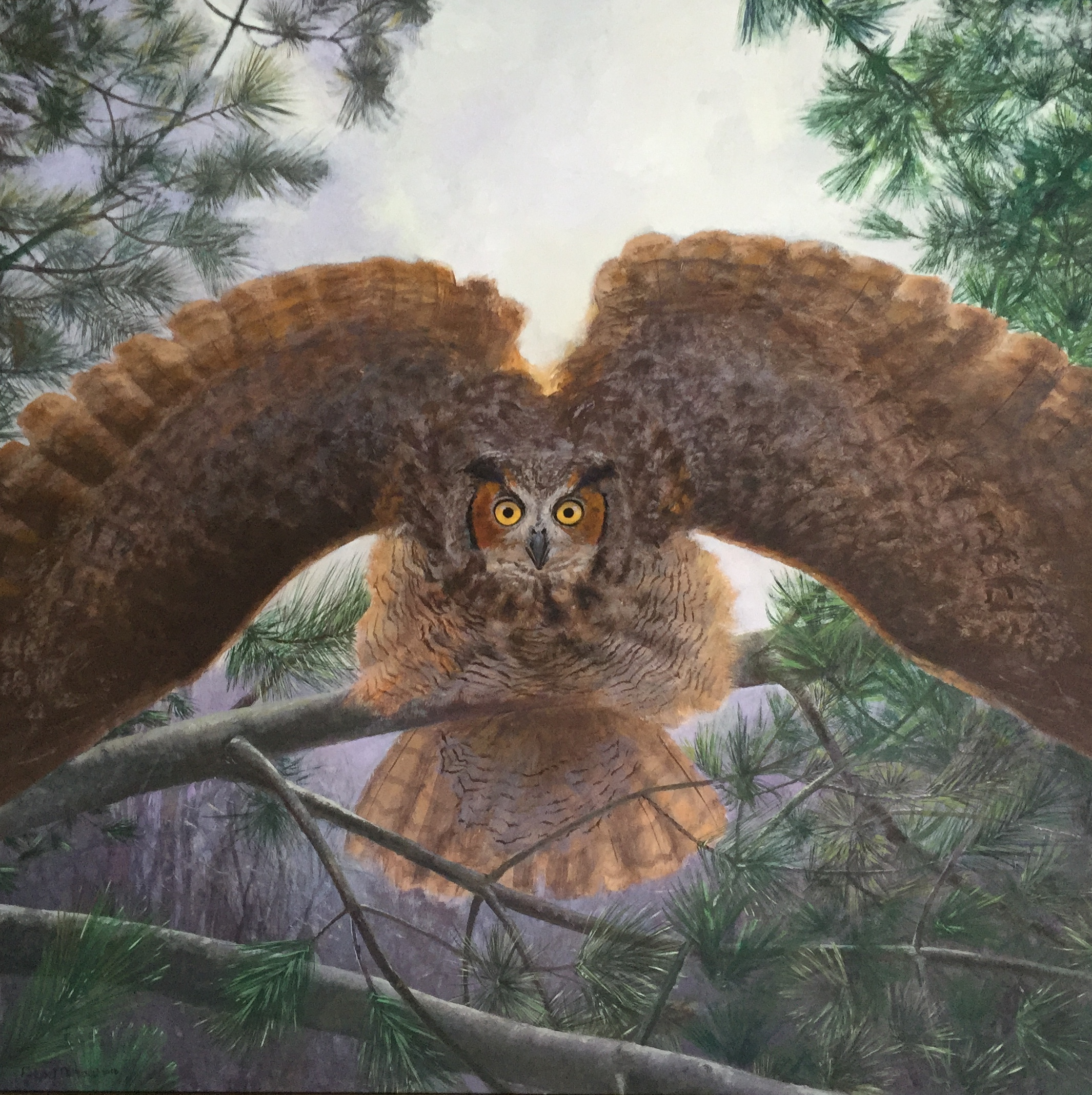 Great horned owl 2016
