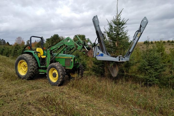 Transplanting spruce