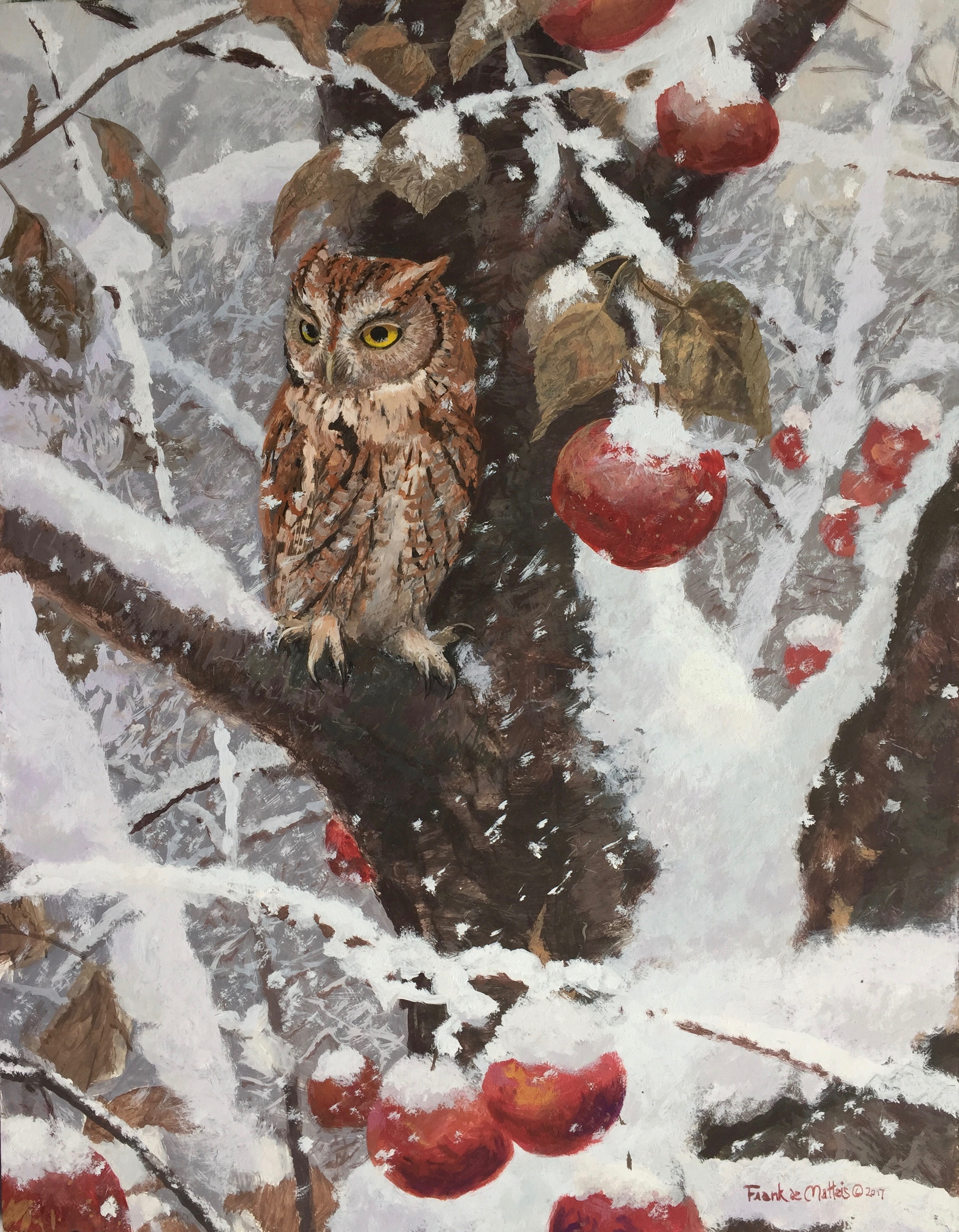 Screech owl and apples