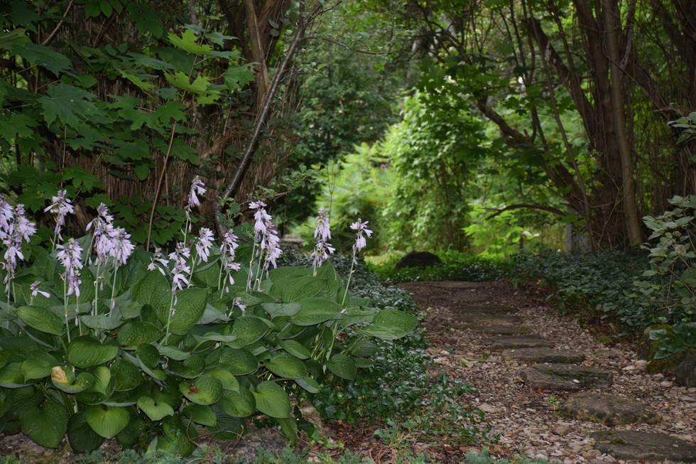 The lilacs