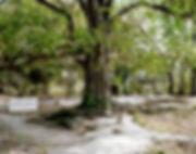 charnier interdit de marcher sur les racines chœung ek cambodge