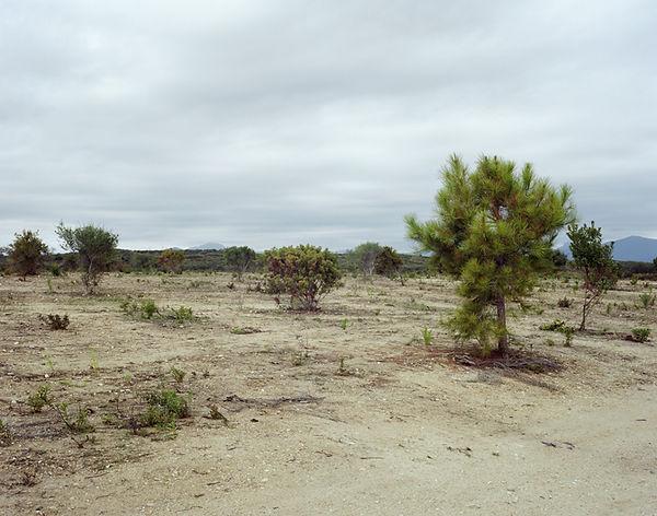 bande de sable pin zone protege