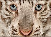 Wild Animal.jpg