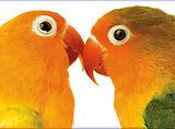 Kissing birds.jpg