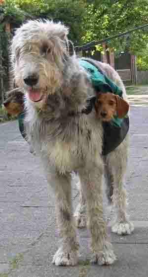 DOG CARRY.jpg