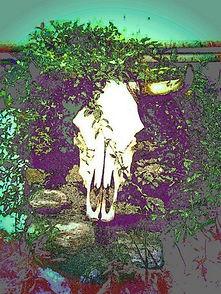 cowhead.jpg