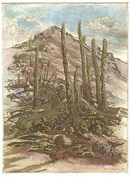 cactus mon (1).jpg